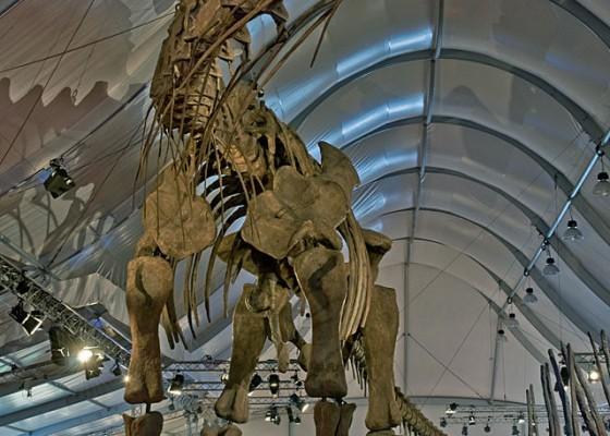 Скелет на Аргентозавър.