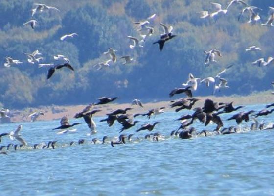 Птичи рай на Бутковското езеро